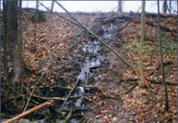 Seepage through dam damaged by tree roots